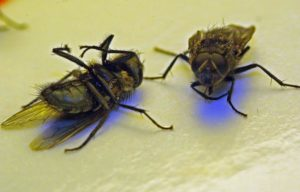 invasion-mouches-répulsifs-dératiseurs