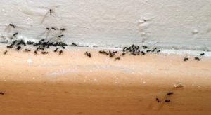 se-débarasser-des-fourmis-maison