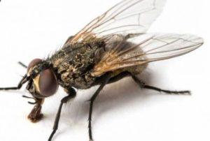 se-débarrasser-mouches-moucherons-insectes