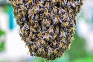 invasion-abeilles-astuce-débarrasser-éliminer