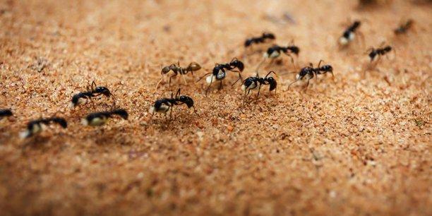 invasion-fourmis-astuces-insectes