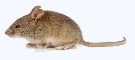 Entreprise contre les souris