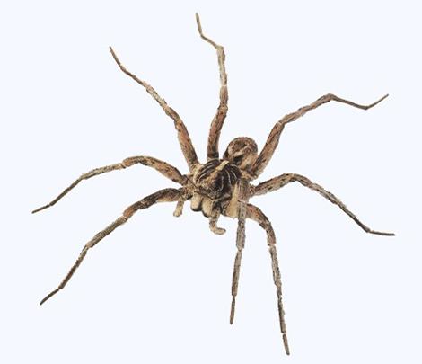 Entreprise contre les araignées