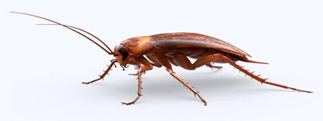 Entreprise contre les cafards et blattes