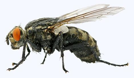 Entreprise contre les mouches et moucherons